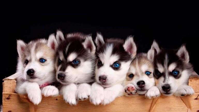 Зоотерапия-собачками
