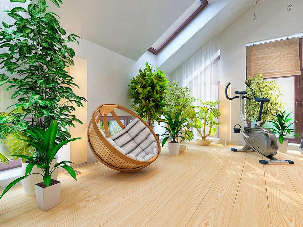 Польза цветов и растений в интерьере квартиры