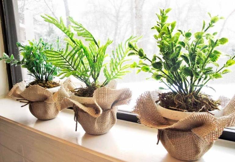 Бюджетное обновление интерьера при помощи растений