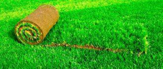 Газон для сада и его виды