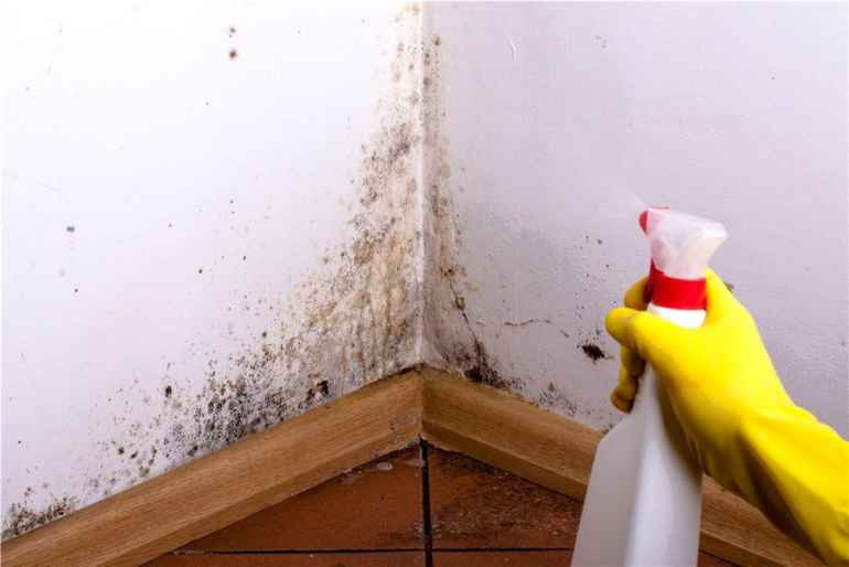 Как плесень влияет на качество ремонта и почему это опасный сосед
